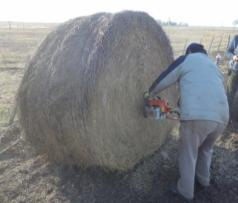 cosecha de nutrientes-forraje