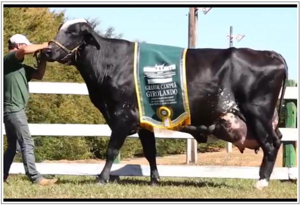 Por qué la búsqueda del mayor desempeño individual de nuestras vacas nos empobrece?
